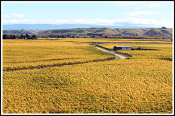 Hawkes Bay Wine Country with Hawkes Bay Scenic Tours